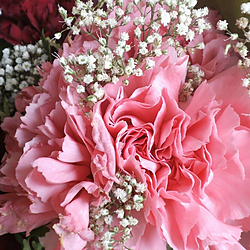 Pinks and Purples image - click to shop
