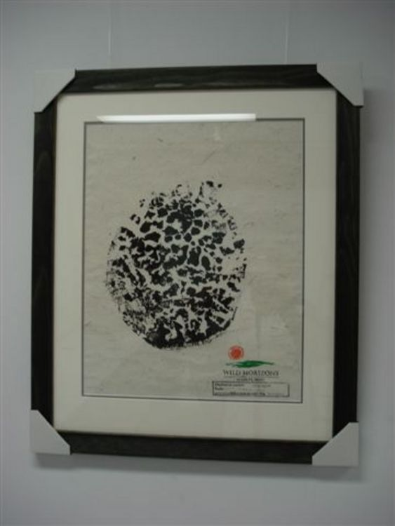 Signature-Elephants Foot Print - Image 1