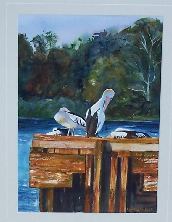 Pelicans - South Perth