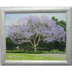 more on Jacaranda Tree at Edith Cowan University WA