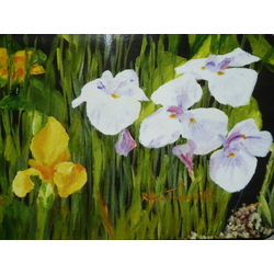 more on Irises