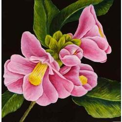 more on Pink Camellias