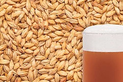 more on Caramel Pilsner Malted Grain per kg
