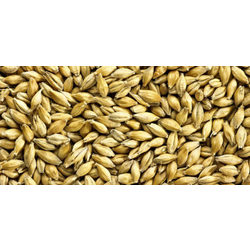 more on Aromatic Malted Grain - 25Kg