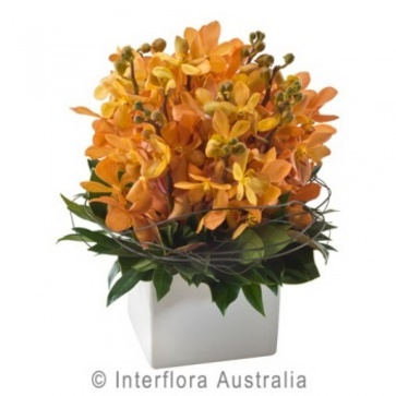 more on Orange Orchids in a Ceramic Pot