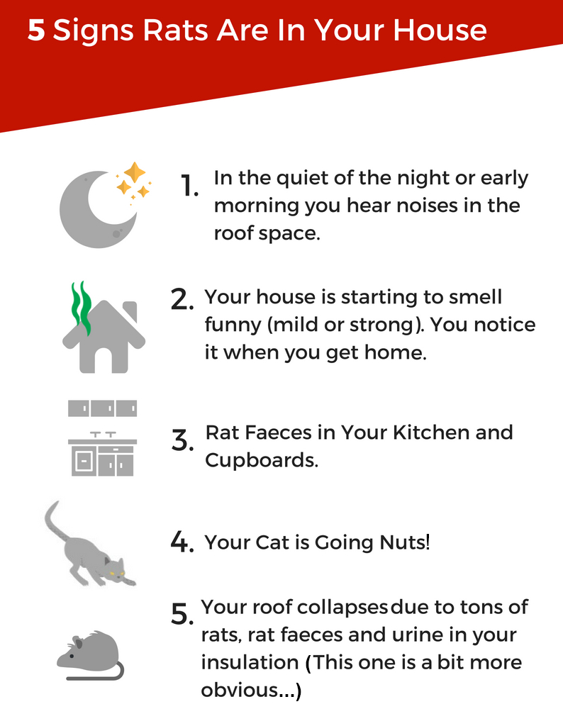 5 Signs Rats are in Your O'Connor Roof