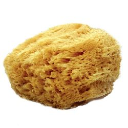 more on Natural Sea Sponge - 122 - 4 LEFT