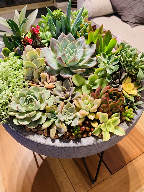 Sunshine Succulents - Large - charcoal -wok -succulent -bowl +30cm - - Image 1