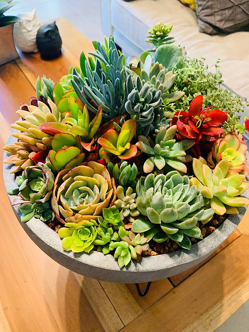 Sunshine Succulents- charcoal- wok- style -succulent- bowl- comes -with -wrought -iron. -Stand - - Image 1