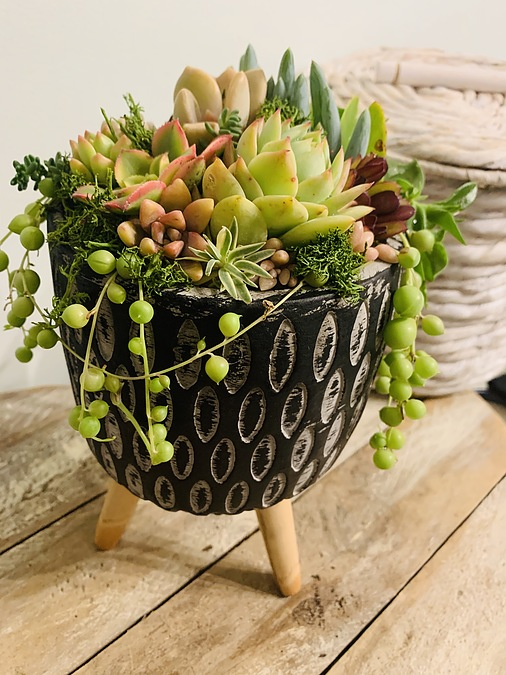 Sunshine Succulents-- Rustic bowl with wooden base - - Image 2
