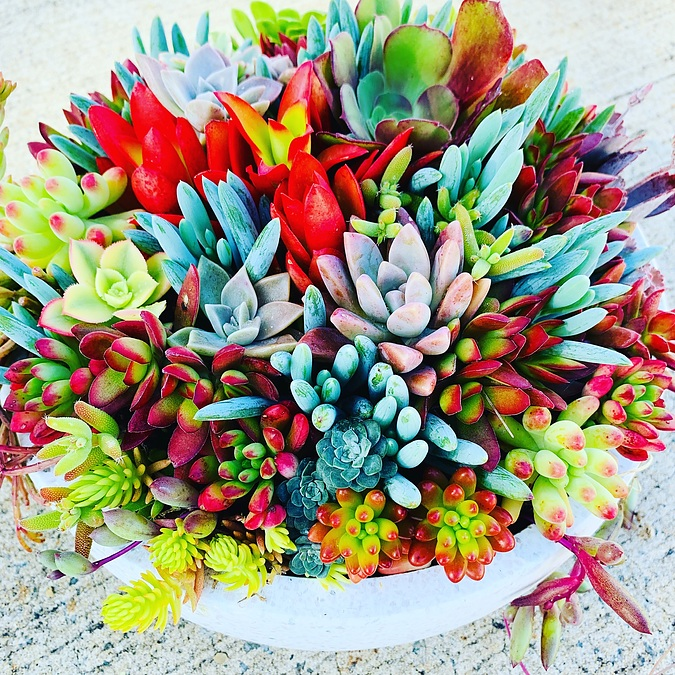 Sunshine Succulents -splash -of -colour- white -wok -bowls -23cm - - Image 1