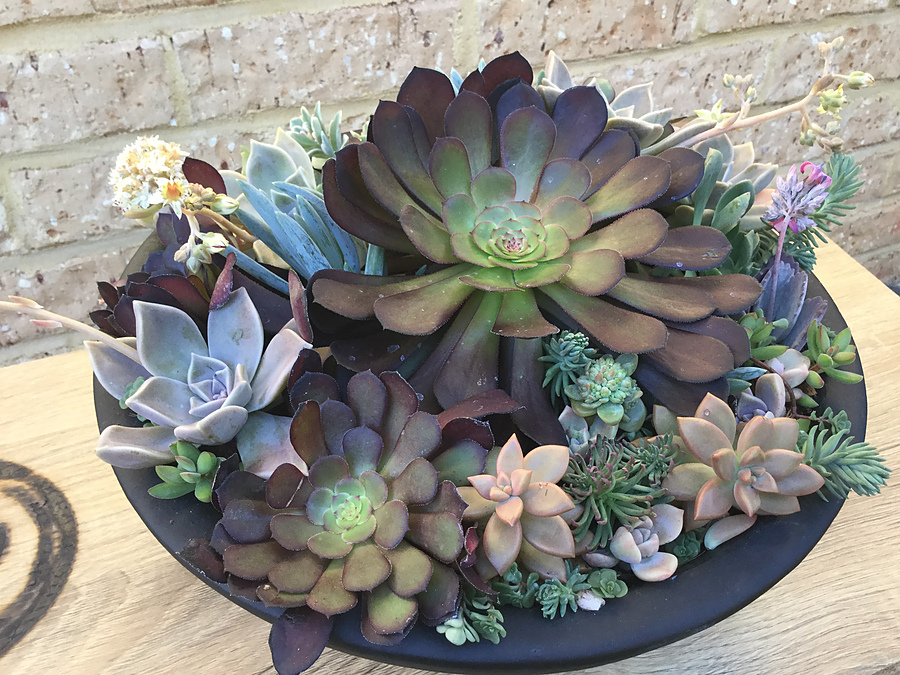 Sunshine Succulents - One of kind in cool pottery pot - Image 3