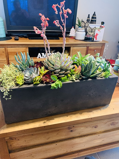 Sunshine -Succulents-charcoal -planter-box -70cm -in -length -and -20cm- - Image 1