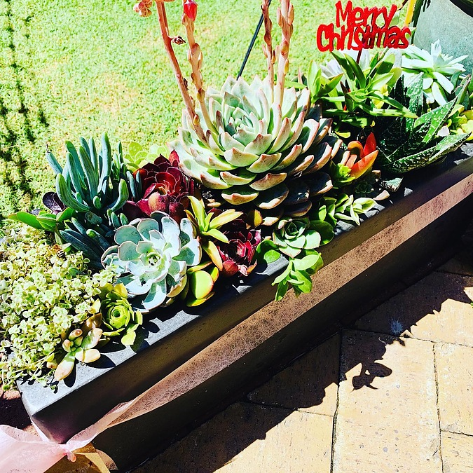 Sunshine -Succulents-charcoal -planter-box -70cm -in -length -and -20cm- - Image 2