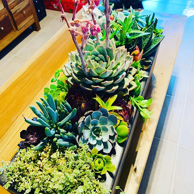 Sunshine -Succulents-charcoal -planter-box -70cm -in -length -and -20cm- - Image 3