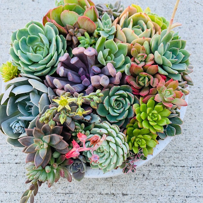 13cm bowl with beautiful succulents packed full of colour - Image 1