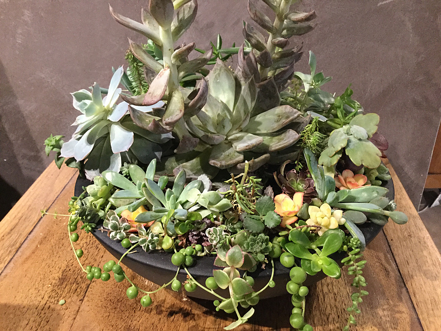 Sunshine Succulents - One of kind in cool pottery pot - Image 1