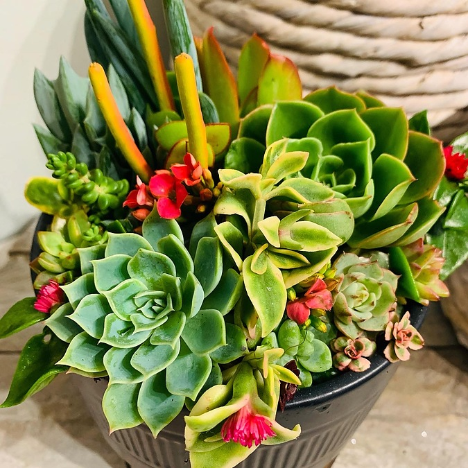 Sunshine Succulents - 13cm charcoal bowl with wooden base - - Image 3