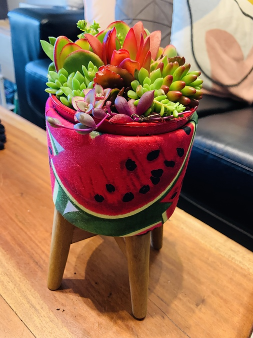 Sunshine Succulents - funky strawberry bowls with wooden base - - Image 3