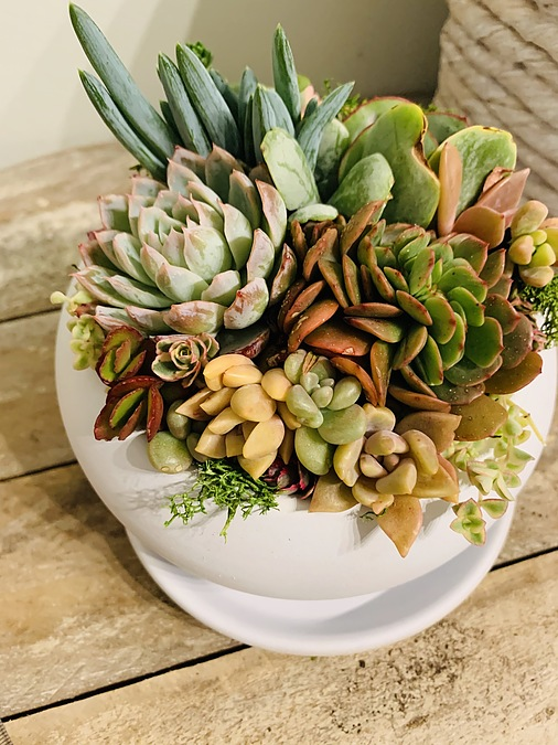 Sunshine Succulents-white - 15cm in diameter and 7 cm in height - - Image 3