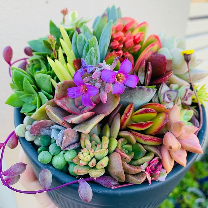 Sunshine Succulents-charcoal 13cm bowl with wooden base - - Image 2