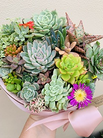 more on Sunshine Succulents- black and rose gold succulent bowl 10cm -