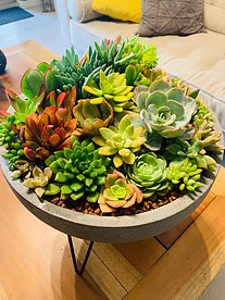 more on Sunshine Succulents - charcoal -succulent bowl -30cm-diameter -