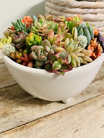 more on Sunshine Succulents - Rustic Wooden planter box 30cm