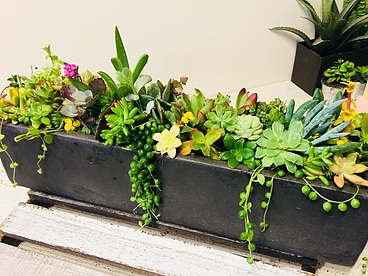 more on Sunshine Succulents- rustic -boat -shape -succulent -table -runner -42cm