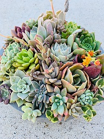 more on Sunshine Succulents -charcoal- table -runner -30cm -