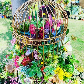 more on Sunshine Succulents -vintage -gold -birdcage-60cm-