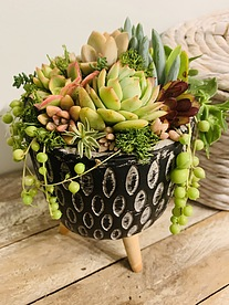more on Sunshine Succulents-- Rustic bowl with wooden base -