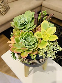 more on Sunshine Succulents-charcoal 13cm bowl with 12cm wooden base  -