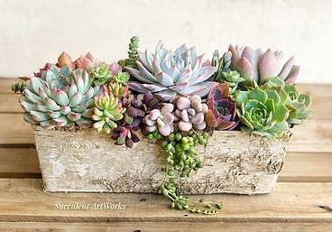 more on Sunshine Succulents white -wash -rectangle -planter -box-