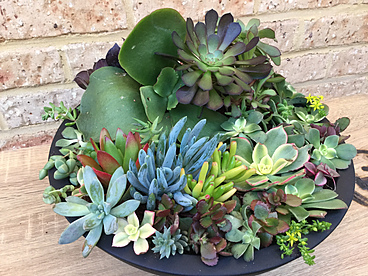 more on Sunshine Succulents - Succulent Arrangement in terrazzo tabletop planter pot