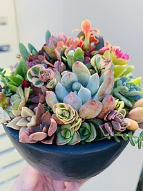 more on Sunshine Succulents charcoal succulent bowl with mini legs 13cm -