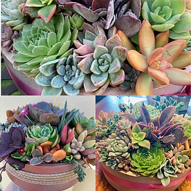 more on Sunshine Succulents- urban cement succulent bowls 23cm-