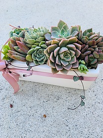 more on Sunshine Succulents- cement white wash rectangle planter 25cm -
