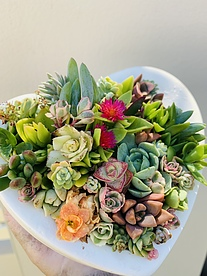 more on Sunshine Succulents love heart shaped bowl 13cm -