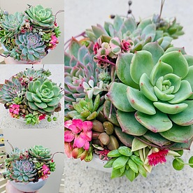 more on -Sunshine Succulents- white mini bowl with legs-
