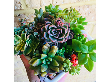 more on Sunshine Succulents - One -of -kind -in -cool- pottery- pot -13cm- whiite bowl- with -wooden -stand -