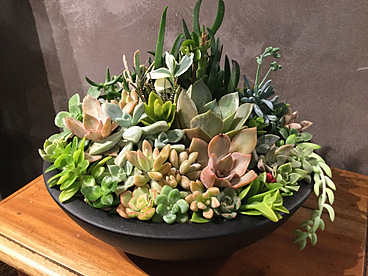 more on Sunshine Succulents - Black terrazzo succulent bowl 30cm full of colour