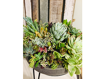 more on Sunshine Succulents - Charcoal wok style succulent bowl full of colour