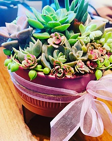 more on Sunshine Succulents pink mini bowl with wooden base 13cm-