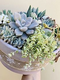 more on Sunshine Succulents-- Christmas succulent bowl 20 cm