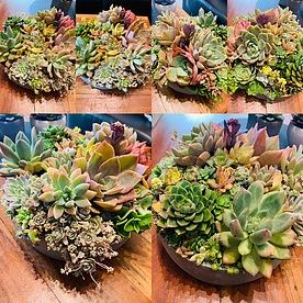 more on Sunshine Succulents - urban cement bowl 24cm -