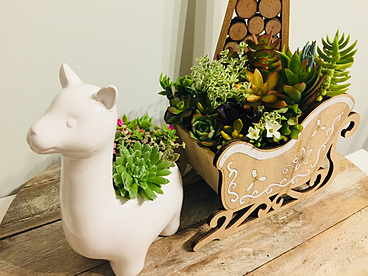 more on Sunshine Succulents - ceramic Alpacia and Santa sleigh come as a set -