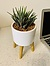 Photo of Sunshine Succulents - 15cm white bowl with wooden base -