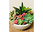Photo of Sunshine Succulents - Mini- white -bowl -12cm -