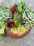 more on Sunshine Succulents- chocolate -brown -bowl -15cm -